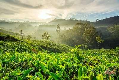 Goa Kerala Tour
