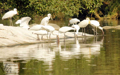 Karnataka Bird Watching Tour