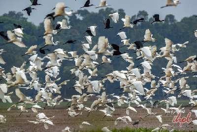 Kerala Backwater Holiday
