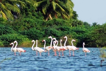 13 Nights 14 Days Goa and Kerala Tour Package