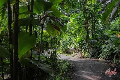 Explore praslin island seychelles during 4 days tour