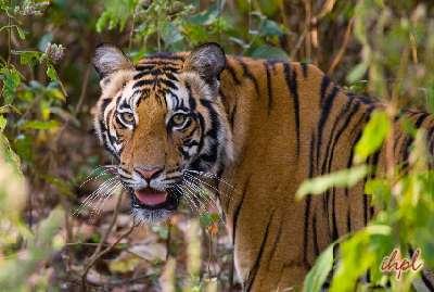 Jeep Safari in Bandhavgarh