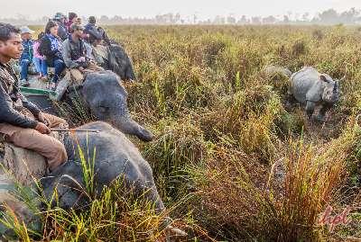 Rhino in Assam
