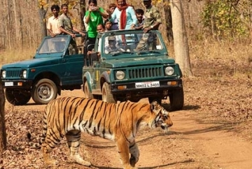 Short Escape to Pench