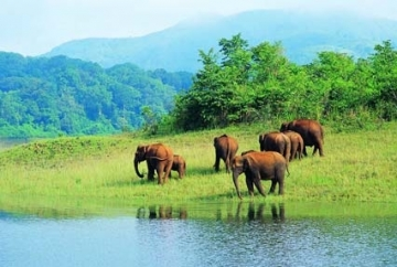 Short Escape to Periyar