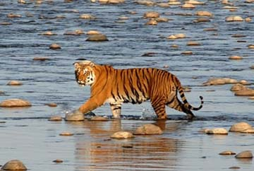 2 Nights 3 Days Sundarbans Tour from Kolkata