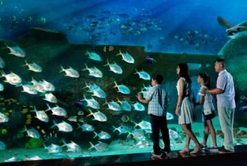underwater sea aquarium singapore