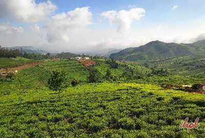Bangalore Ooty Mysore Honeymoon Tour