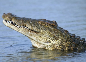 Spot a crocodile or rare species of birds
