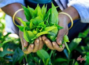 Exciting Sri Lanka Trip