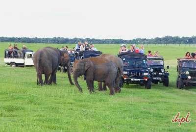 elephant ride during Sri Lanka tour