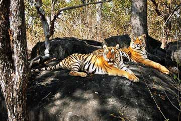 7 Days Sunderbans Tour Package
