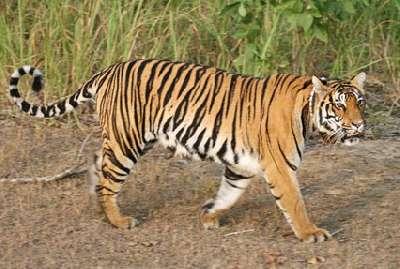 Taj Tiger Temples Tour