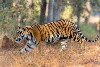 Madhya Pradesh Tiger & Temple Tour
