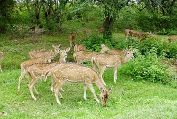 18 Days South India Wildlife Tour Package