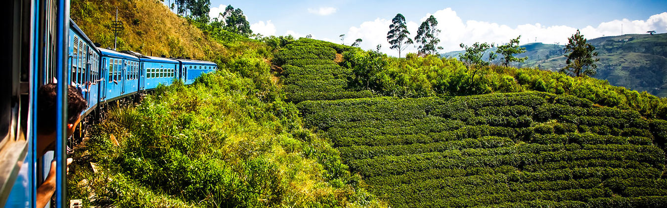 Enjoy tea plantation during 4 days tour