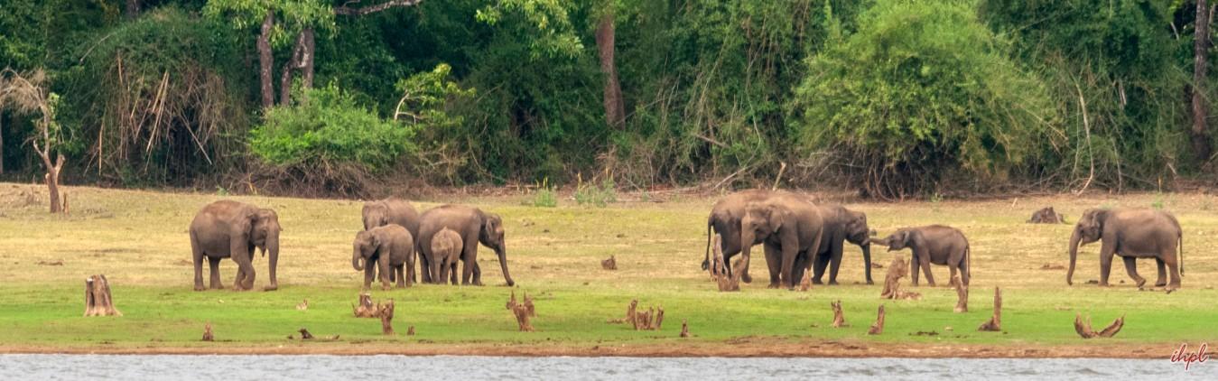 Wild Adventure Tour in South India