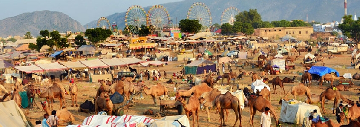 festival in rajasthan, Pushkar Fair