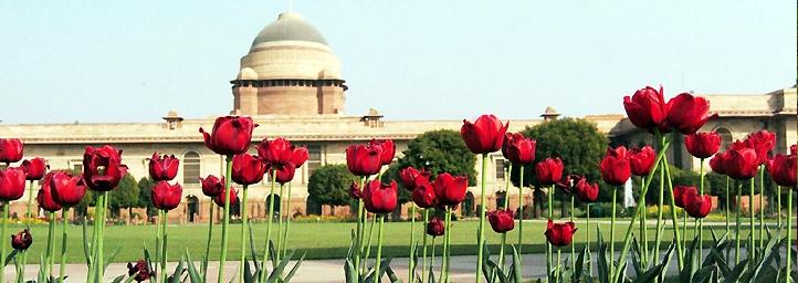 The Delhi Flower Show in delhi