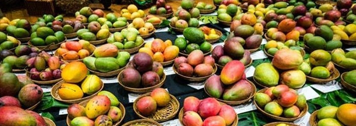 Mango Festival in new delhi