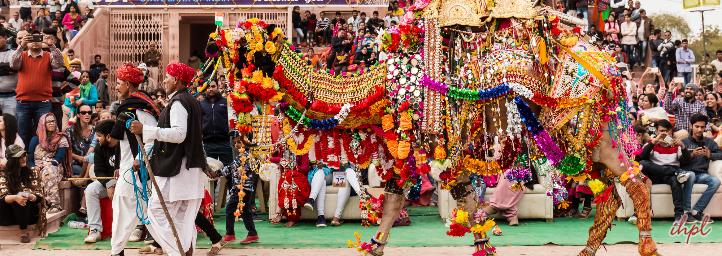 camel festival in rajasthan