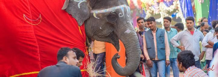 Sonepur Mela, fair in bihar