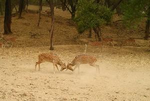 Deer Park in New Delhi, India