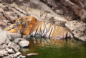 Ranthambore National Park Sawai Madhopur