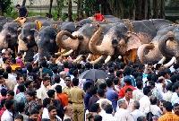 Aanayootto festival in Kerala