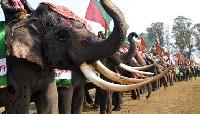 Elephant Festival in Kaziranga, Assam