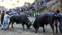 Sair festival in Shimla, Himachal Pradesh