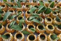 Nirjala Ekadashi festival in Uttar Pradesh