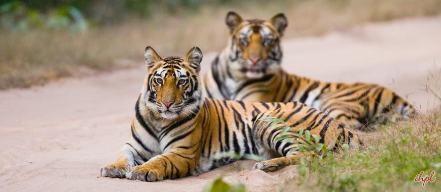 Wildlife in bandhavgarh