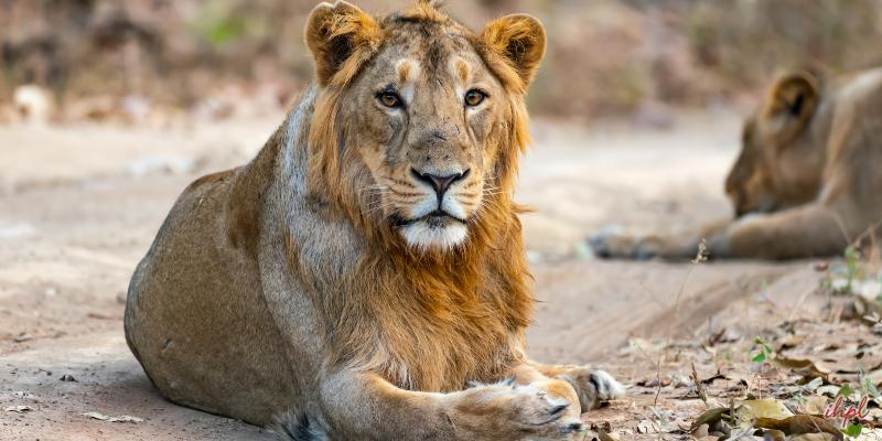 Sasangir National Park