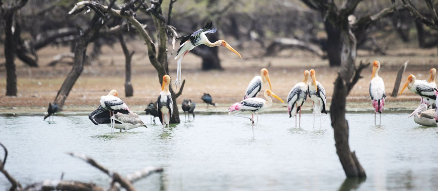 Tirunelveli bird sanctuary