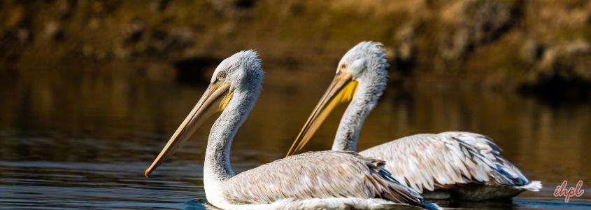 bharatpur fort in Rajasthan