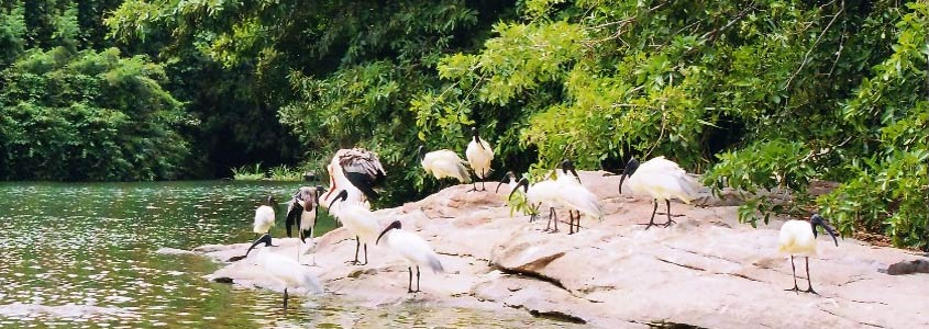Thattekad Bird Sanctuary, Kerala