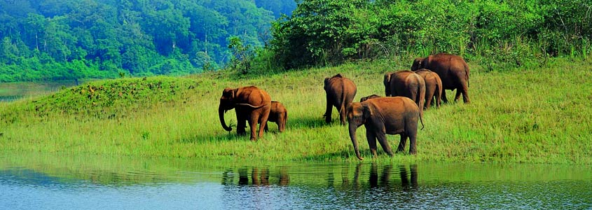 National Park in Thekkady, kerala