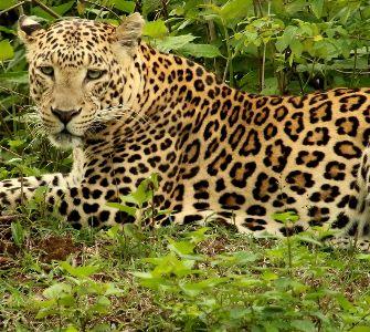 temple in bandipur, karnataka