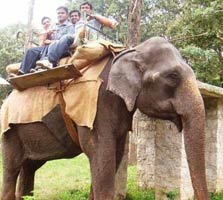 elephant ride in coimbatore