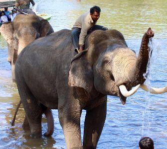 wildlife in Dubare, Karnataka