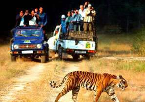 India Jeep Safaris