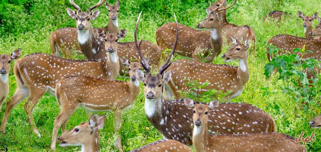 Kuldiha Wildlife Sanctuary-Wildlife in Orissa